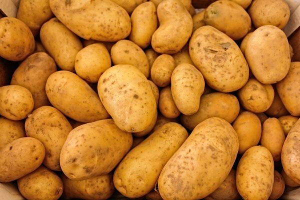 Kartoffelsorte - Welche Kartoffel ist die Richtige für die perfekten Pommes Frites?